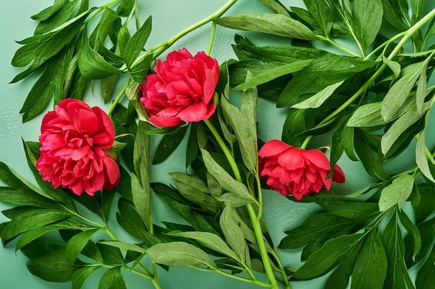 Schöner roter pfingstrosenblumenstrauß über grünem hintergrund, draufsicht, kopienraum, flach. valentinstag, muttertag hintergrund.