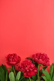 Schöner roter pfingstrosenblumenstrauß über rotem hintergrund, draufsicht, kopienraum, flach. valentinstag, muttertag hintergrund.