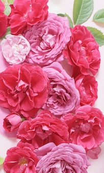 Schöner roter und rosa rosenhintergrund