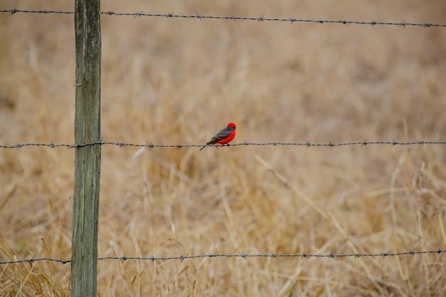 Schöner roter vogel auf dem zaun einer schönen landschaft des bauernhofes der natur