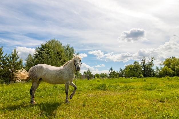 Schöner schimmel auf weide mit grünem gras