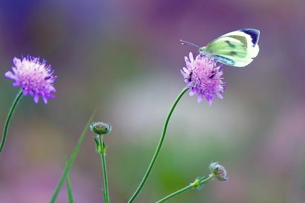 Schöner schmetterling der nahaufnahme, der auf der blume sitzt. schmetterling sitzt auf der violetten blume
