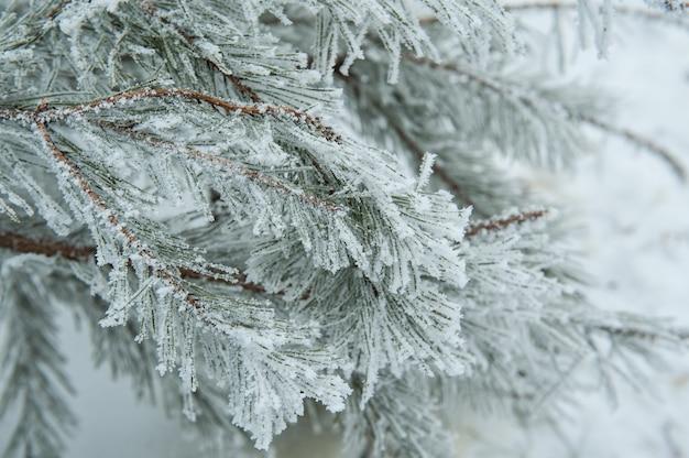 Schöner schneebedeckter baumast im winterpark