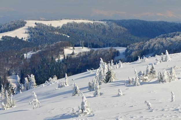 Schöner schneebedeckter hang mit tannenbäumen, die mit schnee bedeckt sind, stehen gegen den blauen himmel an einem sonnigen wintertag.