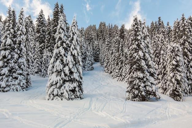 Schöner schneebedeckter hügel voller bäume
