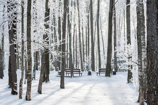 Schöner schneebedeckter park im winter. bäume im schnee und frost. gefriertag.