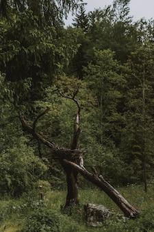 Schöner schuss der grünen bäume im wald