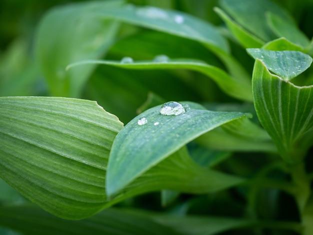 Schöner schuss der grünen pflanzen mit wassertropfen auf den blättern im park