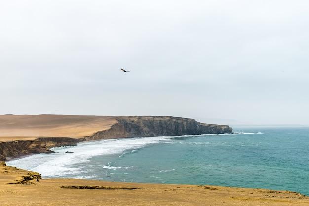Schöner schuss der klippe nahe dem meer mit einem vogel, der unter einem bewölkten himmel fliegt