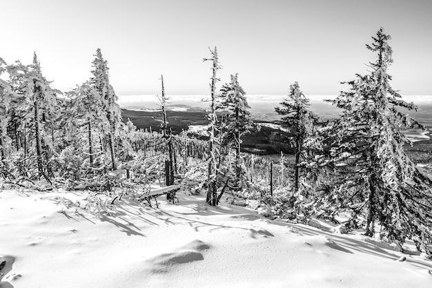 Schöner schuss der tannenbäume, die im wald mit dem klaren himmel mit schnee bedeckt sind