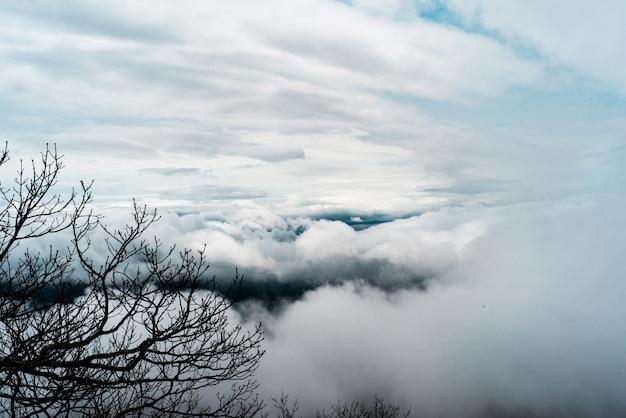 Schöner schuss der weißen großen wolken am himmel und an den ästen an der seite