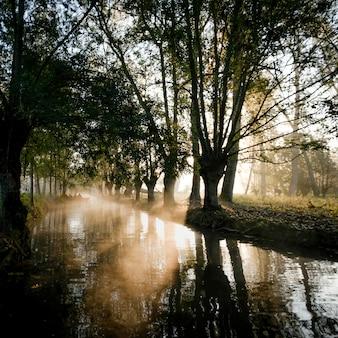 Schöner schuss des sonnenaufgangs, der im fluss reflektiert wird, der durch hohe bäume umgeben wird