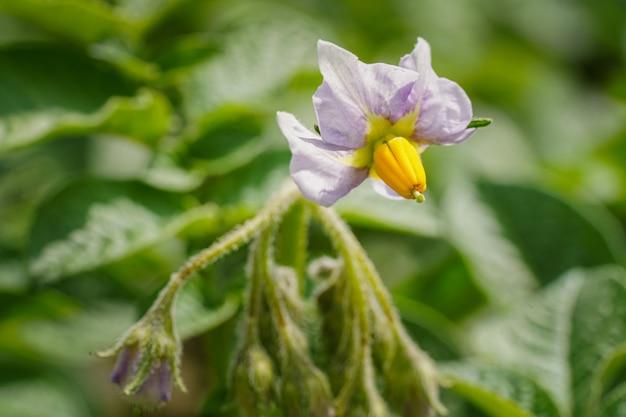 Schöner schuss einer baummalvenblume mit grünen blättern - großartig für einen natürlichen hintergrund