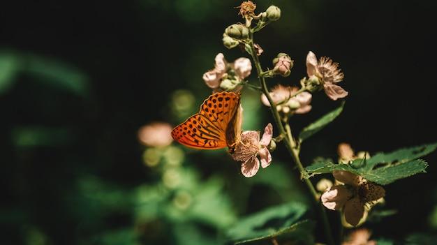 Schöner schuss einer blühenden pflanze in einem wald mit einem schmetterling, der nektar davon in einem wald trinkt