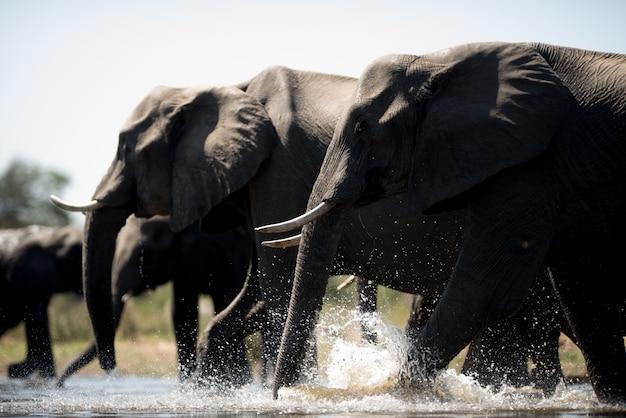 Schöner schuss einer elefantenherde