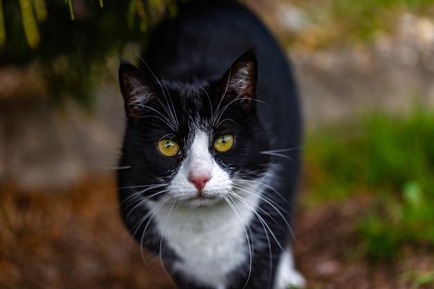 Schöner schuss einer niedlichen schwarzen katze, die die kamera auf dem garten anstarrt