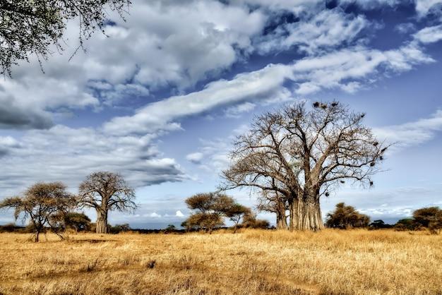 Schöner schuss eines baumes in den savannenebenen mit dem blauen himmel
