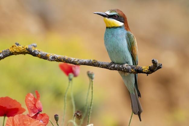 Schöner schuss eines bienenfresservogels, der auf einem ast im wald thront