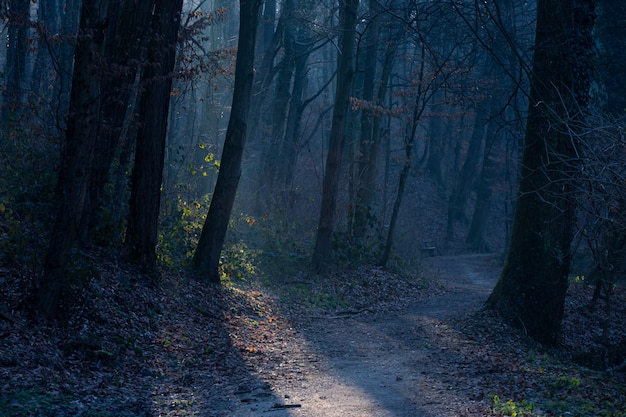 Schöner schuss eines düsteren pfades im maksimir-park in zagreb, kroatien