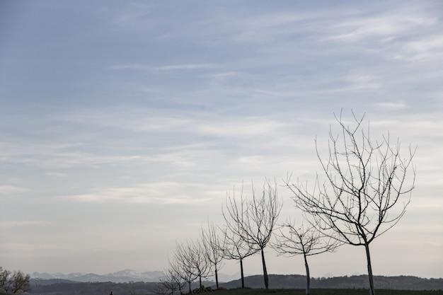 Schöner schuss eines feldes mit kahlen bäumen in einer reihe während des frühen frühlings