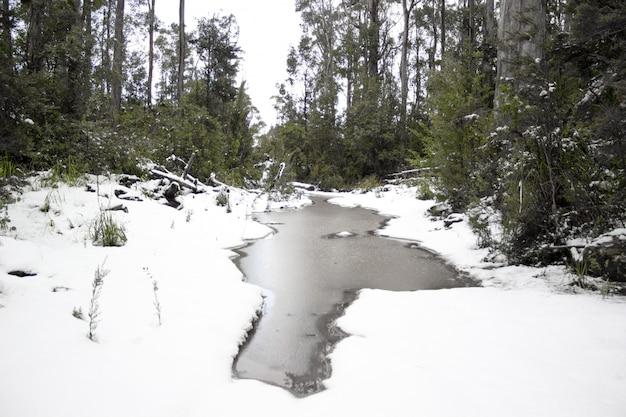 Schöner schuss eines gefrorenen sees im verschneiten boden in einem wald an einem wintertag