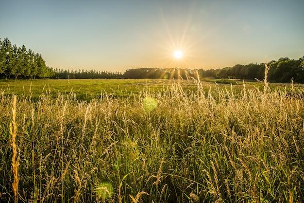 Schöner schuss eines grasfeldes und der bäume in der ferne mit der sonne, die in den himmel scheint