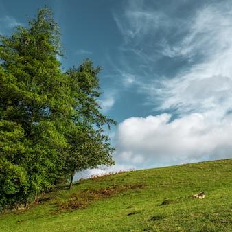 Schöner schuss eines großen baumes in einem grünen hügel und im bewölkten himmel
