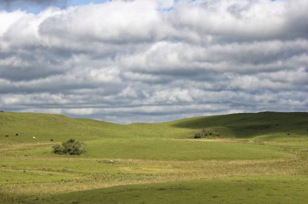 Schöner schuss eines grünen feldes unter dem weißen bewölkten himmel