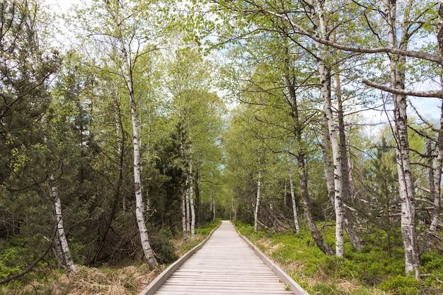 Schöner schuss eines grünen schmalen weges, der zu einem schönen morgenspaziergang in schwarzwald, deutschland führt