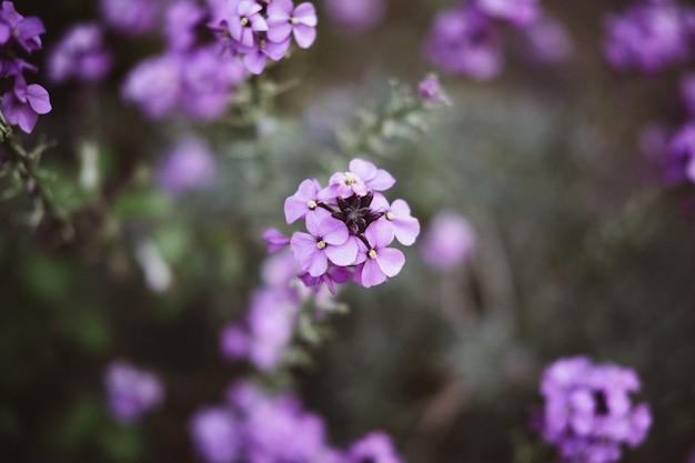Schöner schuss eines lila blumenzweigs im fokus