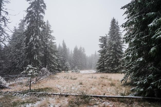 Schöner schuss eines nebligen winterwaldes