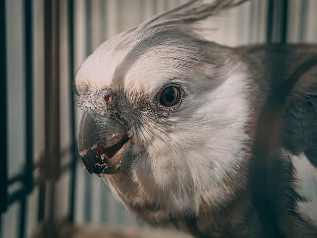 Schöner schuss eines niedlichen papageis
