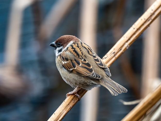 Schöner schuss eines niedlichen sperlings, der auf einem zweig im park steht