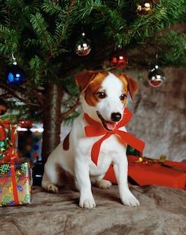 Schöner schuss eines niedlichen welpen, der ein rotes band mit geschenken und einem weihnachtsbaum trägt