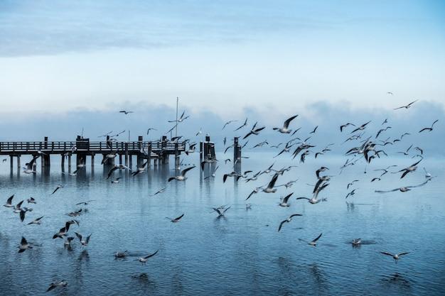 Schöner schuss eines piers an der küste des meeres mit einer großen kolonie von möwen, die vorbei fliegen