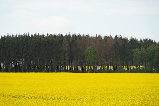 Schöner schuss eines satzes von bäumen, die auf einer landschaft der gelben blumen wachsen
