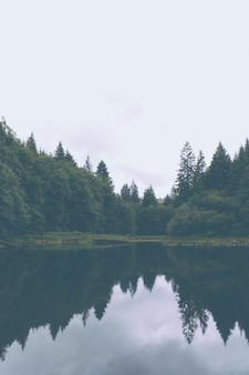 Schöner schuss eines see- und kiefernwaldes