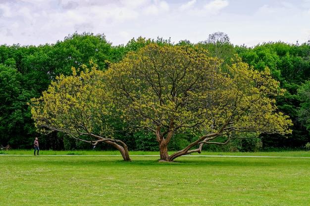 Schöner schuss eines wachsenden baumes in der mitte des parks mit bäumen