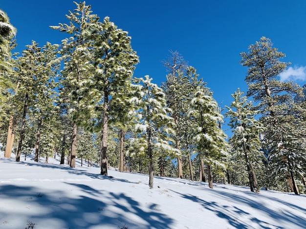 Schöner schuss eines waldes auf einem schneebedeckten hügel mit bäumen, die im schnee und im blauen himmel bedeckt sind