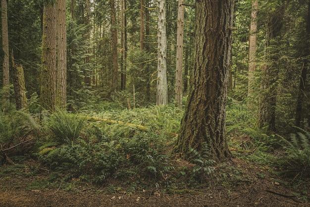 Schöner schuss eines waldes mit grünblättrigen pflanzen und hohen bäumen