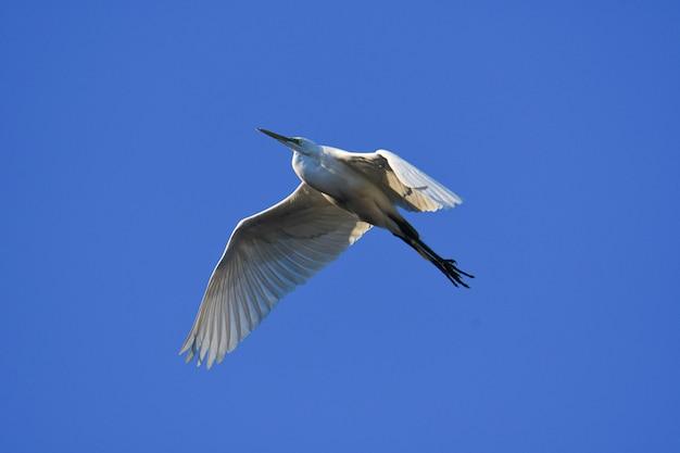 Schöner schuss eines weißen vogels mit dem langen schnabel, der im blauen himmel fliegt