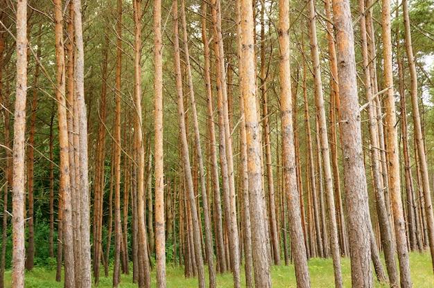 Schöner schuss von bäumen im wald am tag