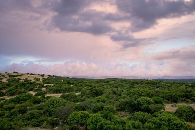 Schöner schuss von bäumen im wald mit einem bewölkten himmel im hintergrund