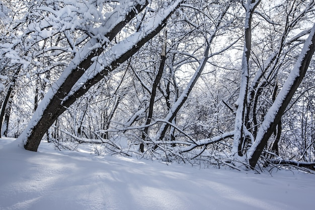 Schöner schuss von bäumen in einem park, der während des winters in moskau, russland vollständig mit schnee bedeckt ist