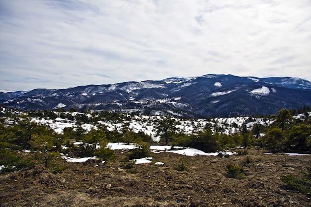 Schöner schuss von bäumen in einem schneebedeckten feld mit bergen in der ferne unter einem bewölkten himmel