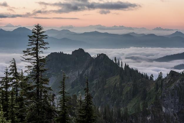 Schöner schuss von bäumen nahe bewaldeten bergen über den wolken mit einem hellrosa himmel