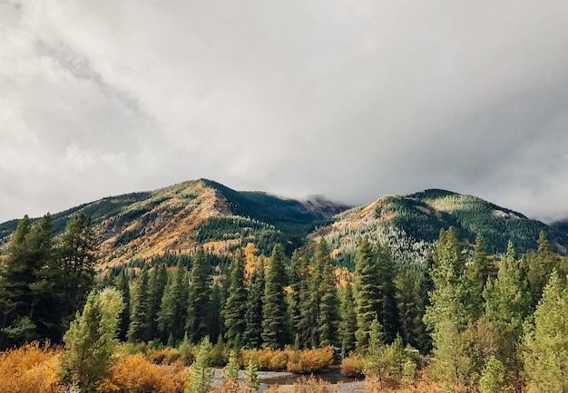 Schöner schuss von bäumen nahe dem wasser mit bewaldeten bergen und einem bewölkten himmel