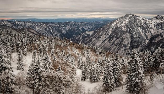Schöner schuss von bewaldeten bergen, die im winter mit schnee bedeckt sind