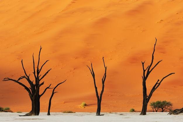 Schöner schuss von drei nackten wüstenbäumen mit einer riesigen orange düne im hintergrund