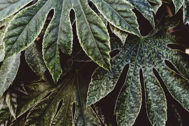 Schöner schuss von exotischen tropischen blättern